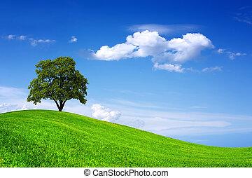 bonito, árvore, carvalho, campo verde