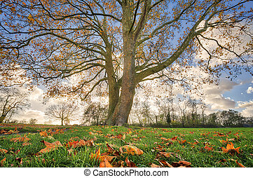 bonito, árvore, com, outono sai