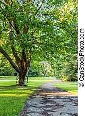 bonito, árvore, em, parque verde, com, caminho, horizontais