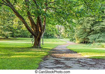 bonito, árvore, em, parque verde, com, caminho, vertical