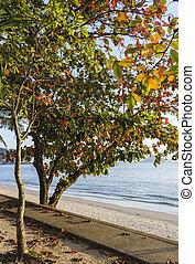 bonito, árvore, praia
