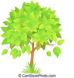 bonito, árvore verde