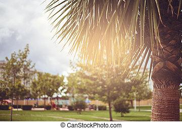 bonito, árvores, dia ensolarado, palma, parque, fundo