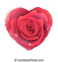 bonito, 10, heart., rosa, eps, isolado, vermelho