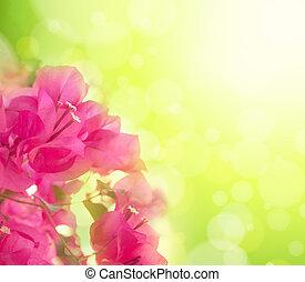 bonito, abstratos, floral, fundo, com, cor-de-rosa, flowers., borda, desenho
