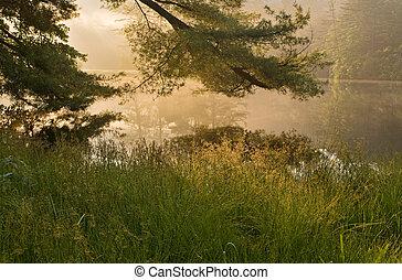 bonito, amanhecer, sobre, calmo, floresta, lago