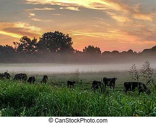 bonito, amanhecer, sobre, terra cultivada, em, carolina sul