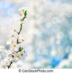 bonito, ameixa, bracnh, com, flores, contra, blured,...