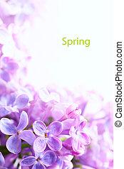 bonito, arte, lilás, primavera, fundo, flores, borda