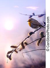 bonito, arte, natureza, primavera, manhã, fundo