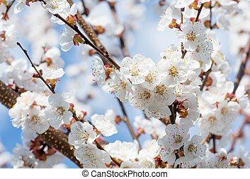 bonito, arte, primavera, cena abstrata, obscurecido, borda, cor-de-rosa, sol, day., experiência., flowers., páscoa, natureza, ensolarado, flare., fundo, pomar, springtime., blossom., árvore, florescer, ou