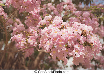 bonito, arte, primavera, cena abstrata, obscurecido, borda, cor-de-rosa, sol, day., experiência., flowers., orchard., natureza, ensolarado, flare., springtime, fundo, blossom., árvore, florescer, ou