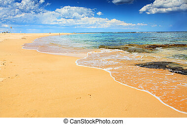 bonito, australiano, praia, em, verão