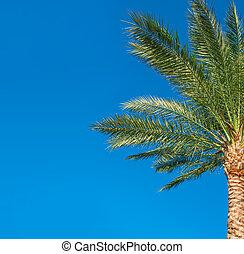 bonito, azul, árvore, céu, palma, fundo
