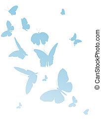 bonito, azul, borboletas, isolado, ligado, um, branca