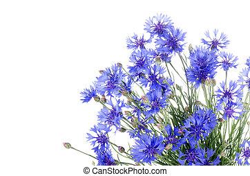 bonito, azul, cornflower