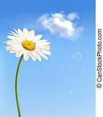 bonito, azul, sky., vector., margarida, frente, branca