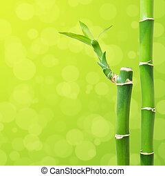 bonito, bambu, borda