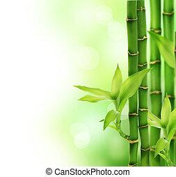 bonito, bambu