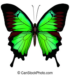 bonito, borboleta, isolado, ilustração, vetorial, experiência verde, branca
