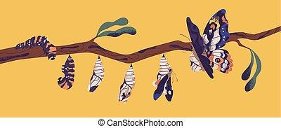 bonito, borboleta, processo, larva, metamorfose, pupa, ciclo, voando, -, winged, branch., transformação, desenvolvimento, apartamento, vida, lagarta, caricatura, illustration., imago., árvore, inseto, vetorial, fases, ou