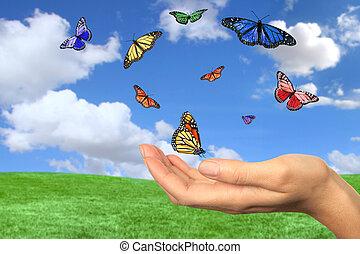 bonito, borboletas, voando, livre