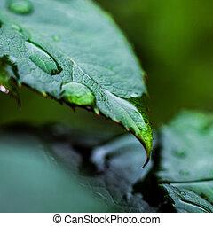 bonito, brilho, planta, conceito, folha, macro, natureza, sol, após, fundo, água, natureza, chuvada torrencial, água, pequeno, verde, gota, gotas, luz
