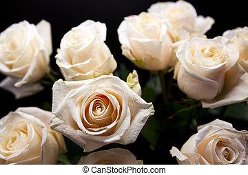 bonito, buquet, rosas cor-de-rosa, close-up.