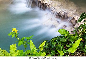 bonito, Cachoeira, aéreo, vista