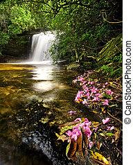 bonito, cachoeira, em, luxuriante, floresta amazônica, com, flores côr-de-rosa