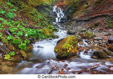 bonito, cachoeira, em, montanha, rio, em, coloridos, floresta outono, com, vermelho, e, laranja sai, em, sunset.