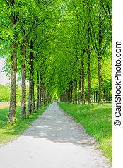 bonito, caminho, floresta, longo