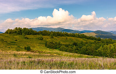 bonito, campo, com, forested, colinas rolantes