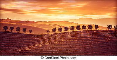 bonito, campo, paisagem