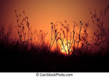 bonito, campo, sobre, pôr do sol
