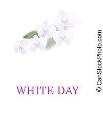 bonito, card., isolado, leaves., ilustração, saudação, day., experiência., flores brancas, orquídea