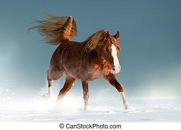 bonito, castanha, cavalo, árabe, inverno