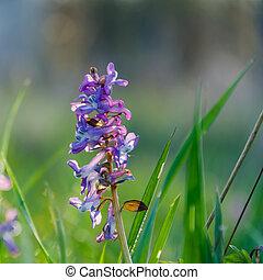 bonito, cedo, flor, springtime