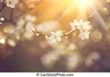 bonito, cena natureza, com, florescer, árvore, e, chama sol