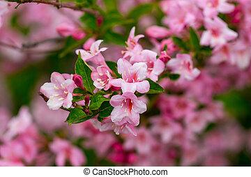 bonito, cena natureza, com, florescer, árvore., primavera, flowers., springtime
