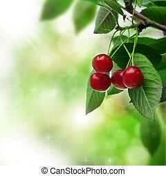 bonito, cereja fresca