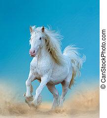 bonito, cigana, cavalo branco