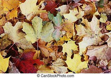 bonito, colorido, folhas, parque, outono
