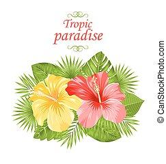 bonito, coloridos, hibisco, flores, flor, e, tropicais, folhas