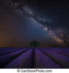 bonito, composto, vibrante, imagem, cor campo alfazema, maneira, leitoso, sobre, paisagem