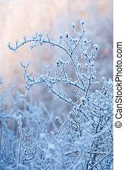 bonito, congelado, bush, inverno