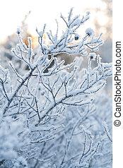 bonito, congelado, planta, inverno