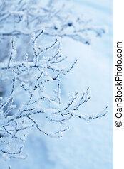 bonito, congelado, plantas, inverno