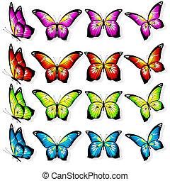 bonito, cor, borboletas, isolado, ligado, um, branca