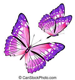 bonito, cor-de-rosa, borboletas, isolado, ligado, um, branca